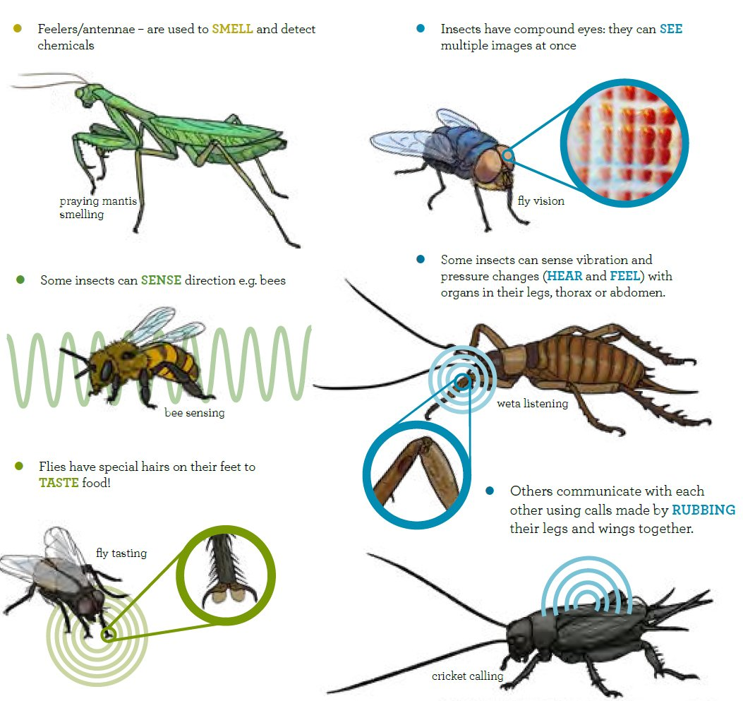 Experiencing Insects Conservation Activities