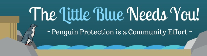 Little Blue Penguin bumper sticker