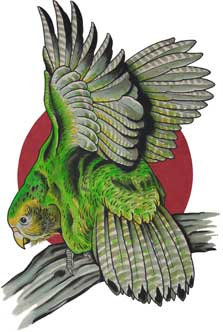 Kākāpō. Copyright Adam Craft/The Tattooed Heart.
