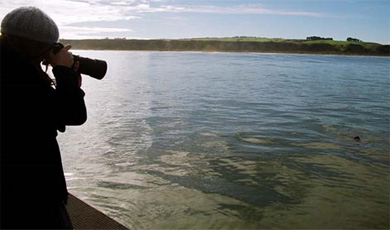 "Photographing Hector's dolphin ""Sky"", Te Waewae Bay, Southland."