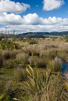 Waikanae Estuary vegetation. Photo: Jeremy Rolfe.