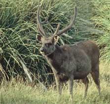 Private Hunting Blocks North Island