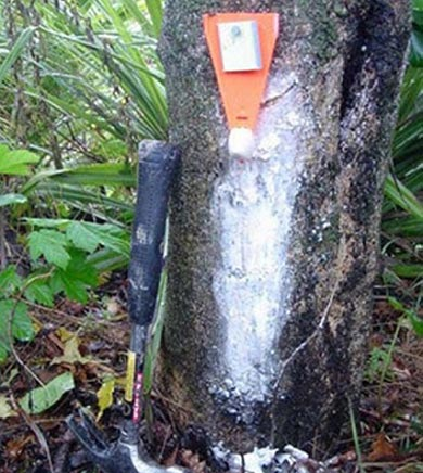 Wax tag on tree with lure.