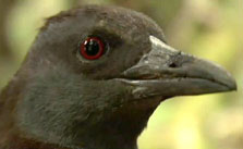 Click this image from the Motu Weka clip to view the video. Image copyright: TVNZ.