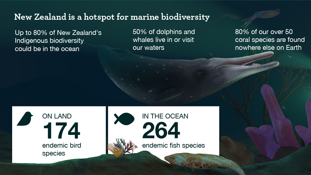 A graphic of a whale under water that says 50% of dolphins and whales live in or visit our waters. It also shows coral and states 80% of our over 50 coral species are found nowhere else on Earth. On land, we have 174 birds native to NZ, but 264 fish species.