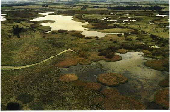 Aerial view of Boggy Pond.