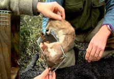 Click this image from the Trappers clip to view the video. Image copyright: TVNZ.
