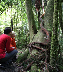 Looking at the rata vine. Photo: Adrienne Grant.
