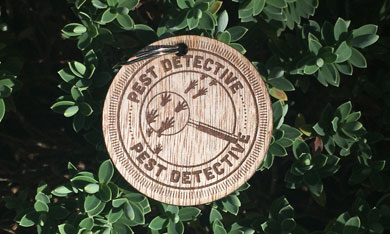 Kiwi Guardians medal for becoming a pest detective.