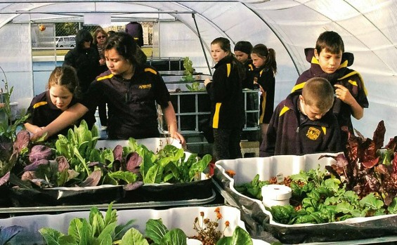 Students tending plants in the Wairakei Primary School Aquaponic garden.