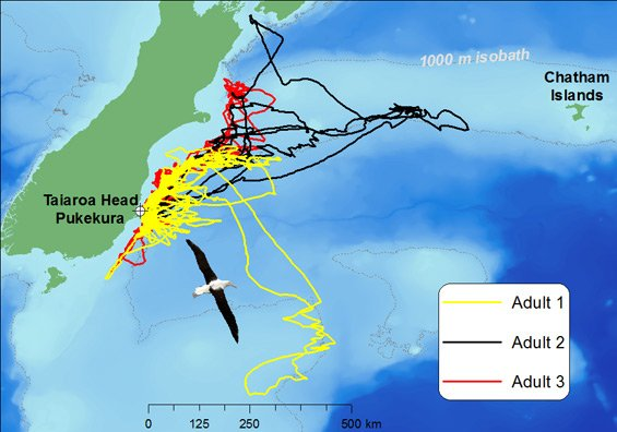 Map showing GPS tracks of albatross.
