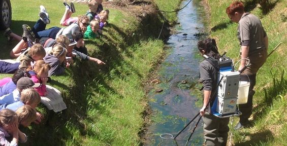 Lan Pham electric fishes for galaxiids in Boundary Creek with Waitahuna School children.