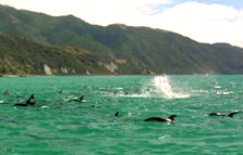 Click this image from the Kaikoura clip to view the video. Image copyright: TVNZ.