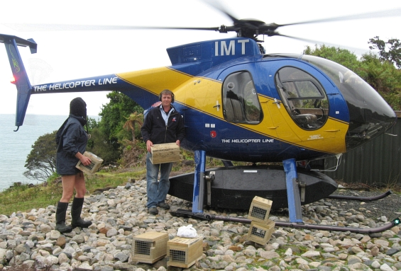 Dale Green from High Country Helicopters drops off traps to Joyce at the South Coast Track.