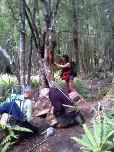 Volunteers and Joyce Kolk from Wairaurahiri Jet install traps along the South Coast Track
