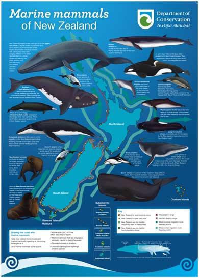 Marine mammals poster.