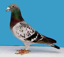 Reporting a bird band: Bird banding