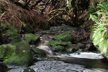 Forest stream - a typical habitat for freshwater invertebrates.