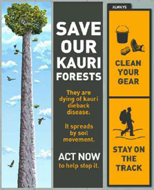 Save our kauri forests poster from the Kauri Dieback website - Stop the spread of kauri dieback disease: clean your gear and stay on the track.