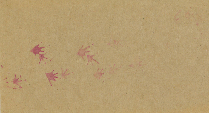 Frog footprints on tracking paper.