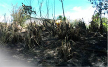 DOC firefighting staff extinguish a small blaze near Kutarere.