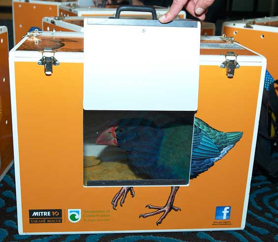 Takahē in its special takahē transport box.