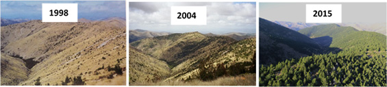 Wilding conifer spread from 1998-2015. Image1 and 3: Richard Bowman, image 2: Graeme Miller. Copyright: Environment Southland
