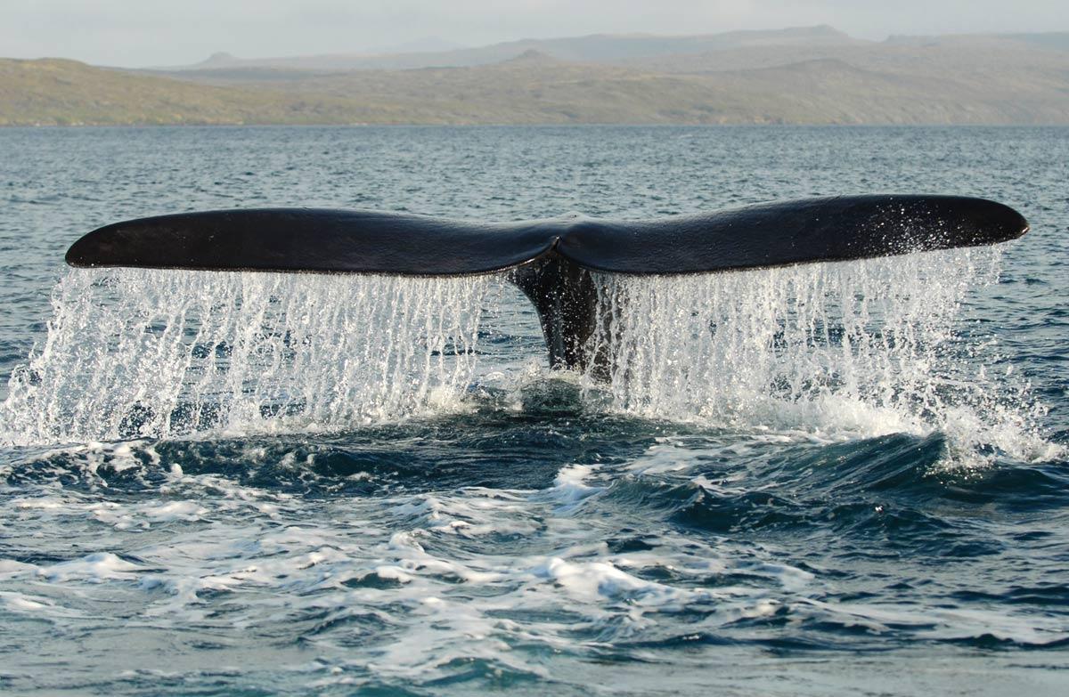 DOC urges public to respect stranded marine mammals