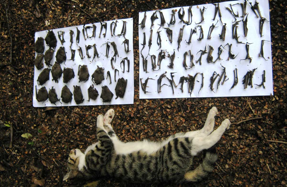 feral cats: new zealand animal pests and threats