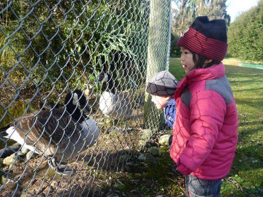 Visitor Centre to Te Anau Bird Sanctuary Walk: Fiordland