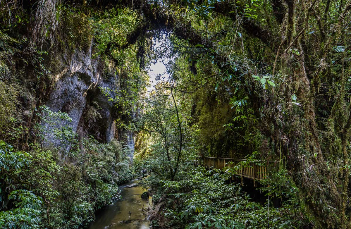 Image result for New Zealand native tracks in nature