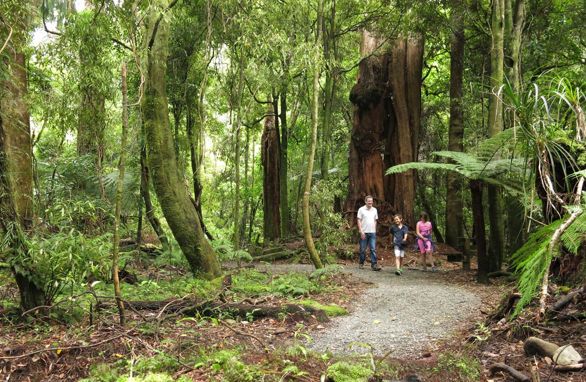 Lokasi syuting film The Lord of The Rings - Taman Regional Kaitoke