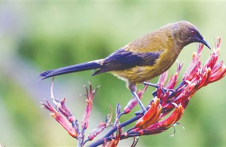 Proposal for New Zealand's next biodiversity strategy