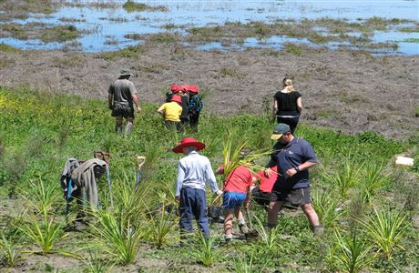 People planting in the wetland.
