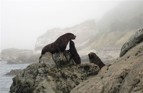 Adult seals and pup on rocks.