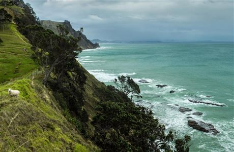 Goat Island coast looking towards Pakiri beach.