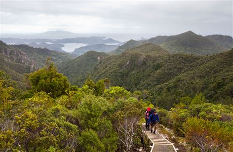 People climbing steps on Aotea Track, Great Barrier Island.