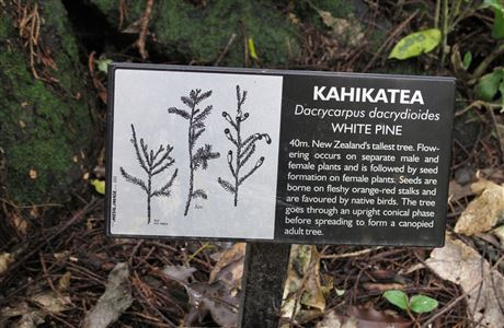 Plaque about kahikatea in Riccarton Bush.