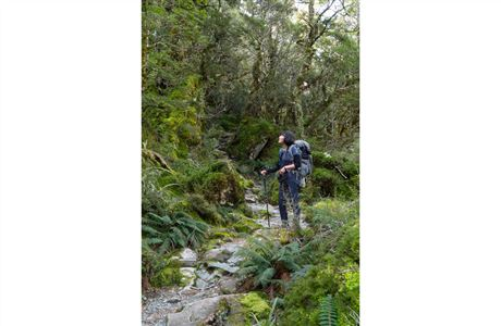 Beech forest, Routeburn Track.