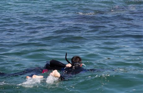Snorkelling in Queen Charlotte Sound.