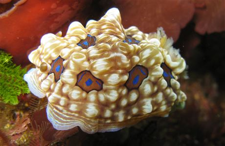 Gem nudibranch.