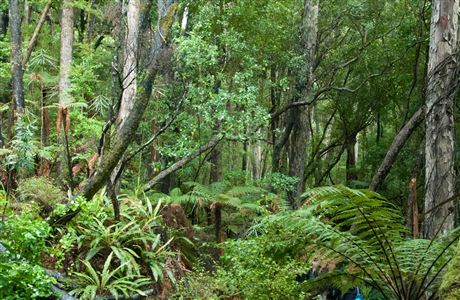 Native forest on Ulva Island.