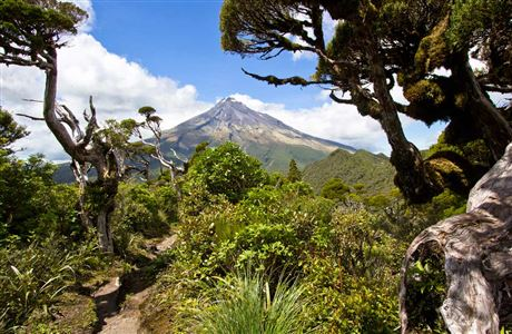 Mt Taranaki from the Ahukawakawa Track.