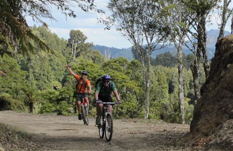 Cyclists on the Timber Trail.