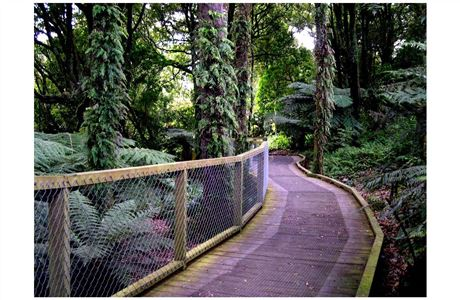 Fernery walk on the Nature Trail.