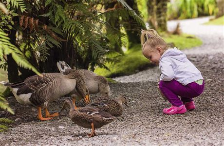 Girl with ducks and geese.