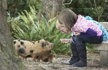 Children meeting kune kune piglets.