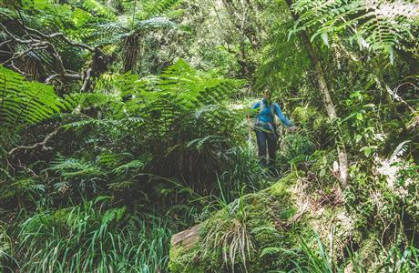 Descent through the bush and tree ferns.