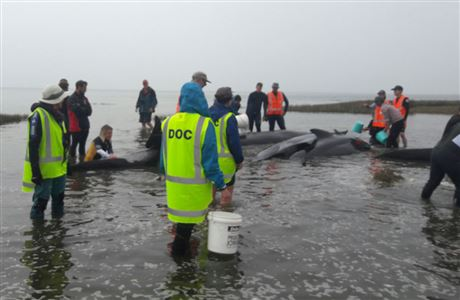 Refloating stranded whales.