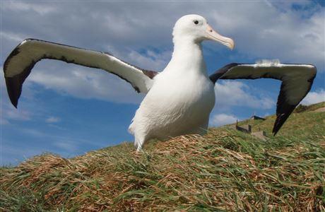 new zealand birds a - z: native animal conservation